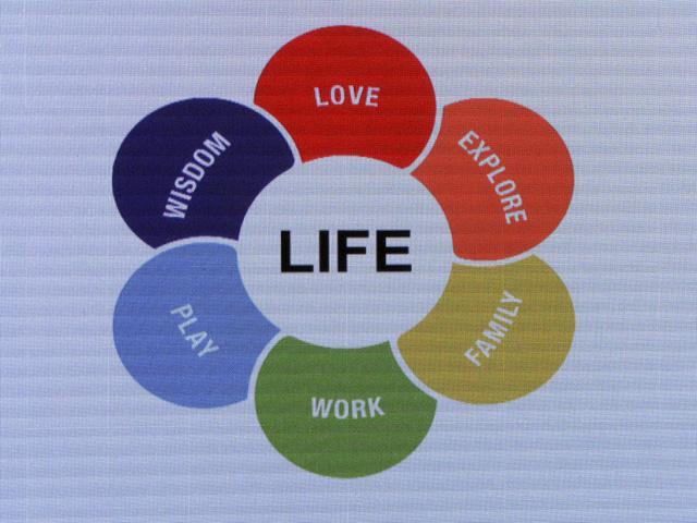 Az életciklus-koncepció egy színes margarétán ábrázolva