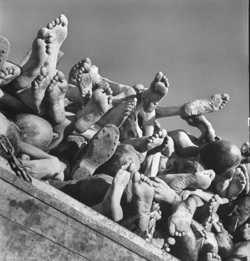 """A képek az egész világot megrázták, még a Life magazin is megszegte azt az elvét, amely szerint nem közölnek """"a nyugalom megzavarására alkalmas"""" képeket - így a második világháború szörnyűségei is ismertek lettek a világ számára.  A képen buchenwaldi halottakat tolnak egy kocsin."""