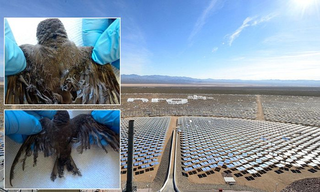 Ivanpah-solar-energy