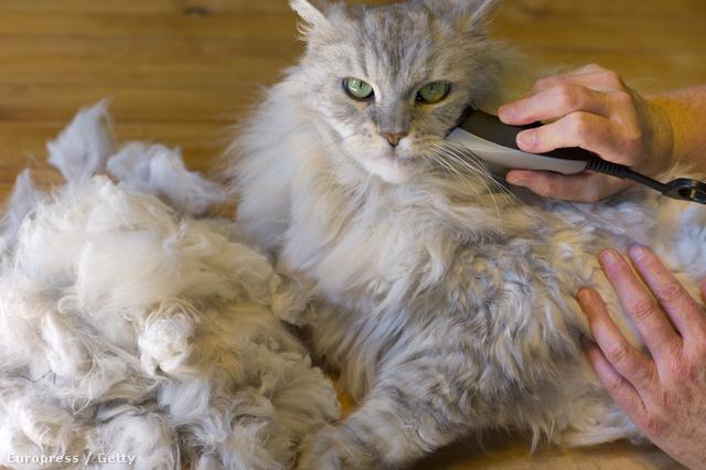 Nemcsak a sztárok, az állataik higiéniája is fontos