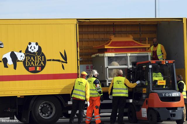 Megérkeztek a pandák Brüsszel repterére