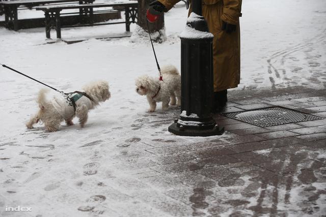 Ennyi havat láttunk idén Budapesten, ebből nem lesz sípálya a Normafán