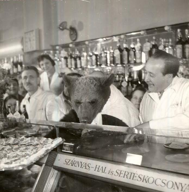 1958-ban, a Mézes Mackó megnyitásának harmadik évfordulójára Onódy Lajos az Állatkerttől kölcsönzött ki egy valódi mackót, aki boldog előkóstolóként ette végig a teljes étlapot