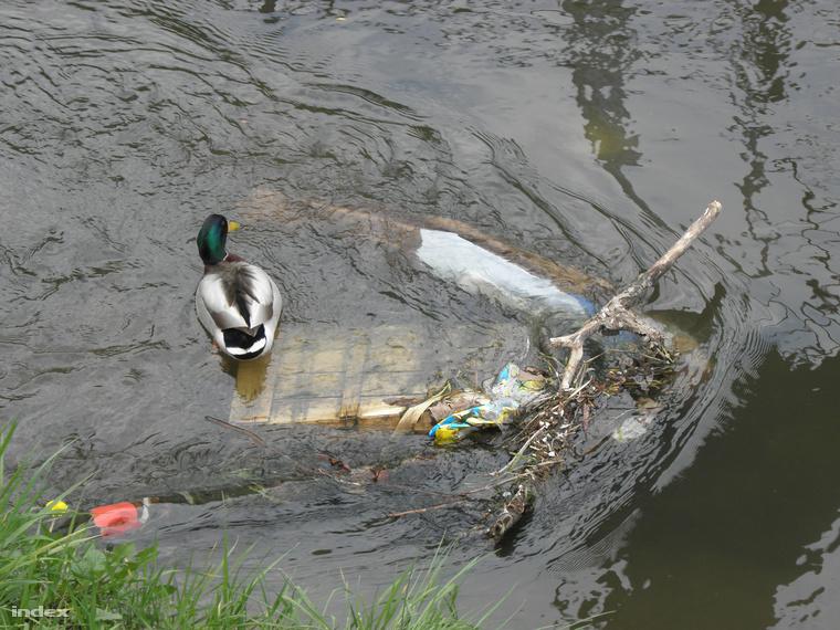 Meglepő, de élet is van a patakban