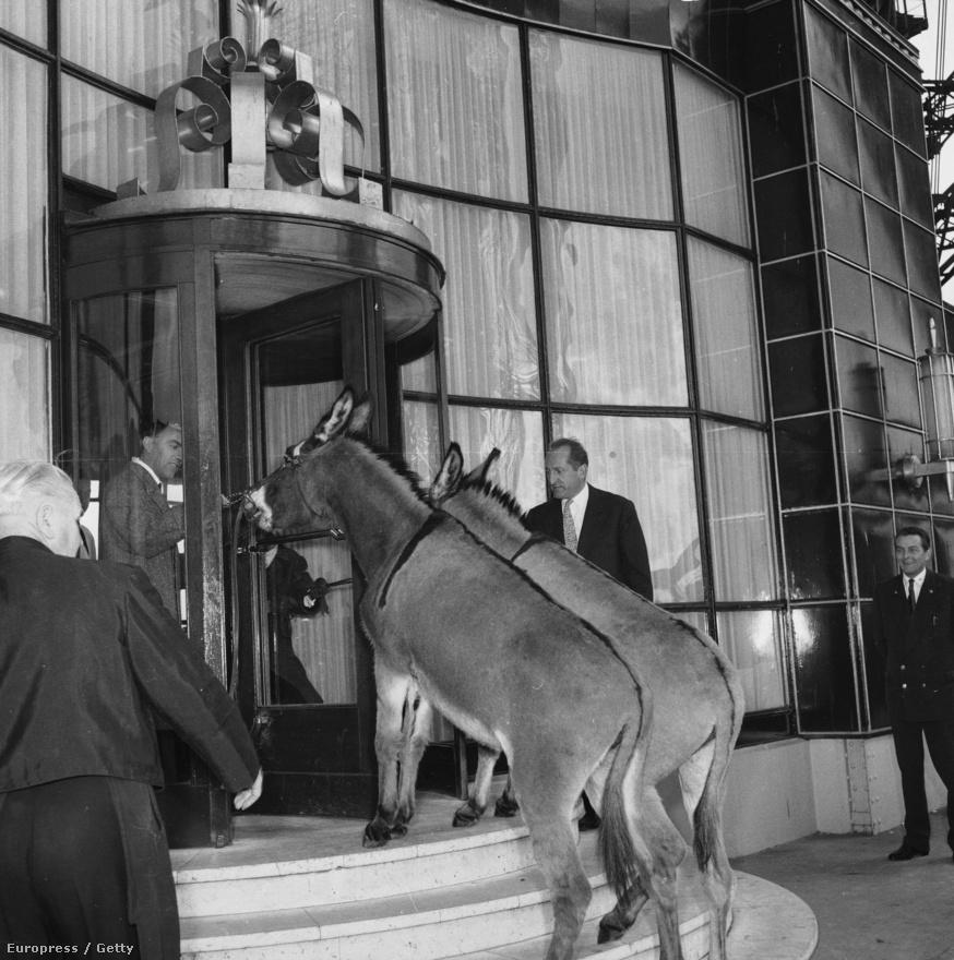 A francia színész-énekes Pierre-Jean Vaillar és két szamár az Eiffel-torony étterme előtt, 1958-ban.