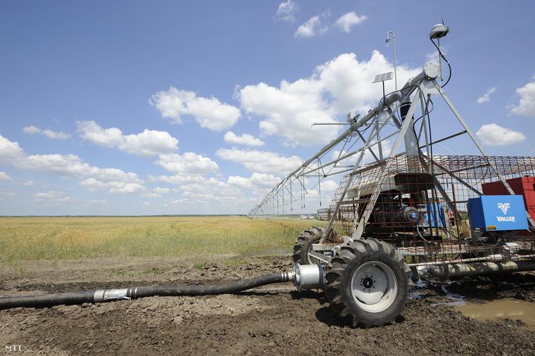 Őszi búzát öntöznek a Gabonakutató Kft. kiszombori telepén egy uniós támogatással 280 millió forintból kialakított Lineár öntözőrendszerrel 2013. június 14-én.