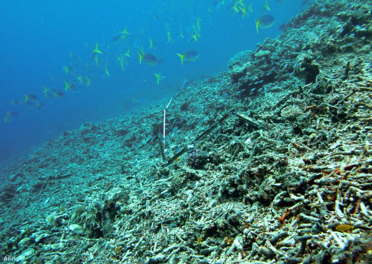 Pusztuló korallzátony