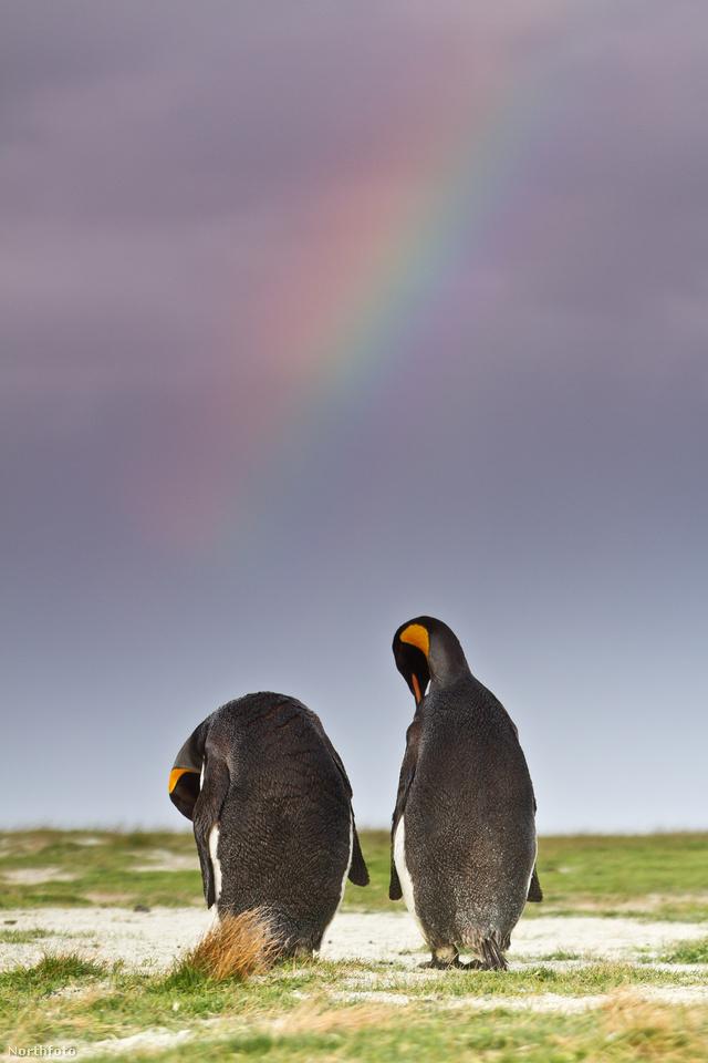 tk3s bm penguin 01697295