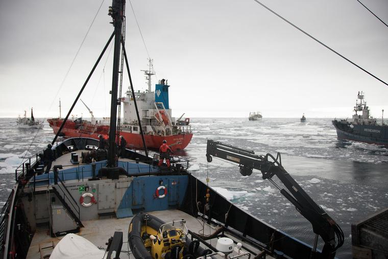 2013 02 20 Antarktiszi csatatér a Steve Irvin-ről Copyright Tim