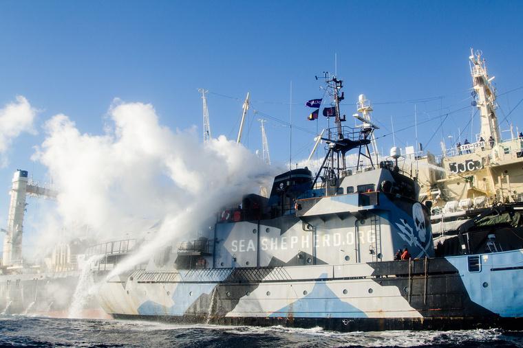 2013 02 25 a Nisshin Maru vizágyúzza a Steve Irwin-t Copyright E