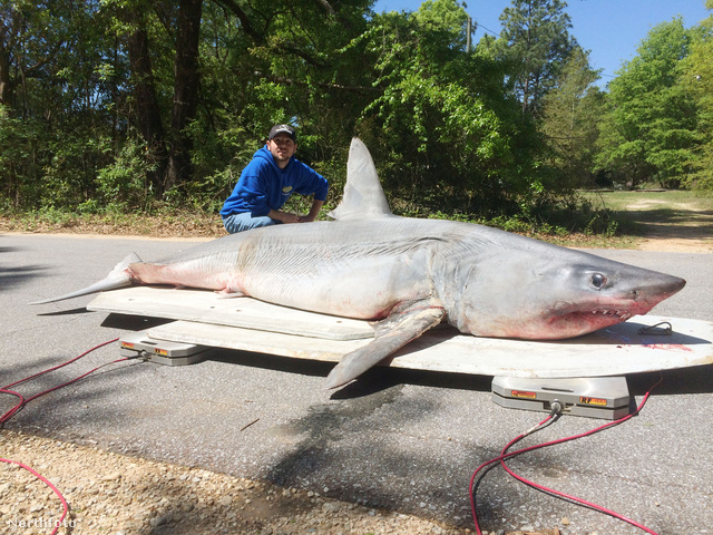 tk3s bm shark 01777408