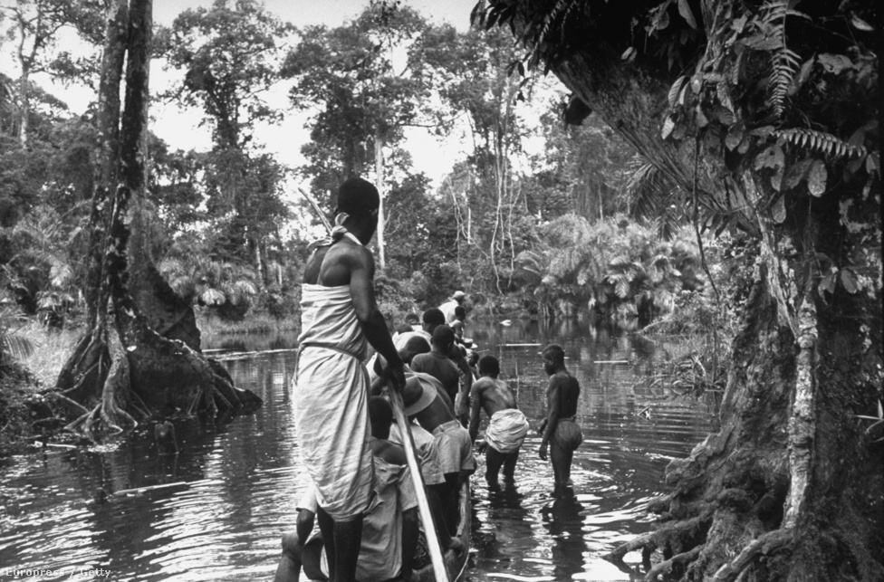 Gorillák után kutat egy bennszülött csoport (nincs pontos helyszín megadva a képhez)