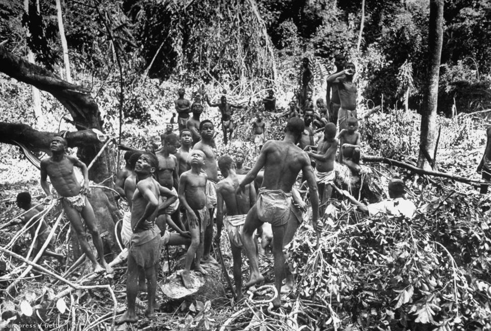 Vadászó őslakosok kémlelik a fákat a dzsungelben.