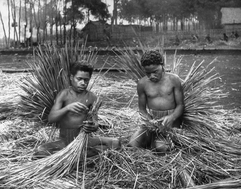 Háztetőt fonnak egy bennszülött törzs tagjai