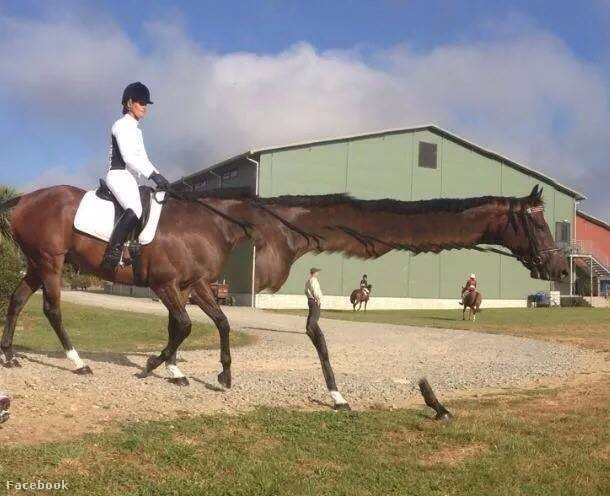 Különösen hosszú nyakú ló
