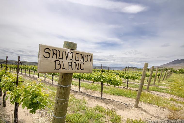 Sauvignon Blanc =szovinyon blan