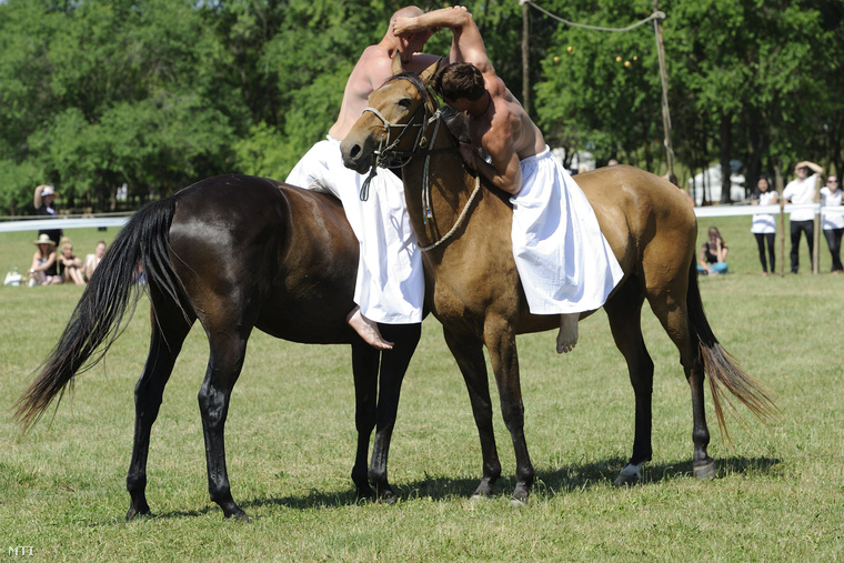 A későbbi győztes Cseppentő Regő és Huszár Mátyás birkóznak lóháton az Ópusztaszeri Nemzeti Történeti Emlékparkban rendezett pünkösdikirály-választáson 2014. június 9-én.