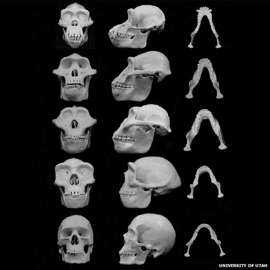 75356046 skullsblackbg.png