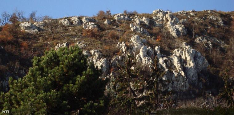 Mészkő és dolomit sziklák a Sas-hegy természetvédelem alatt álló részén a főváros XI. kerületében.
