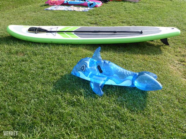 Delfin vigyáz a használaton kívüli paddleboardra