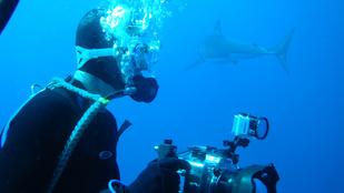 Inkább cápákra költötte a jegygyűrűre félretett pénzt