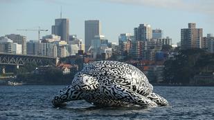 Óriási felfújható teknős úszkál Sydneynél