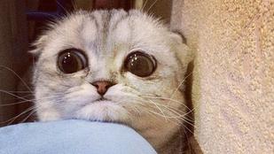 Ismerje meg a búbánatos macskát, Little P-t!