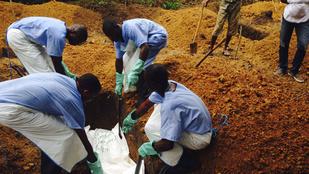 Ebola: Kóbor kutyák marcangolják a fertőzött holttesteket