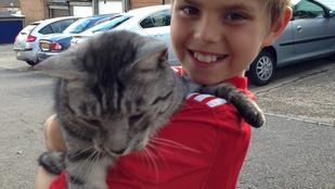 Egy egész családot mentett meg a hős macska