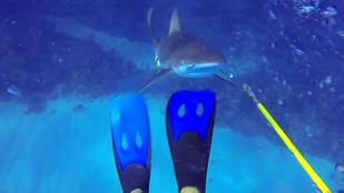 Nyolc videó: ezért ne cicázzon a cápákkal