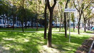 Bréking, elfogyott a fű a Szigony utcánál!