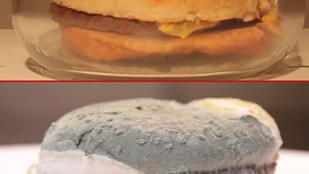 Ilyen penészes lesz a Burger King sajtburgere 30 nap után