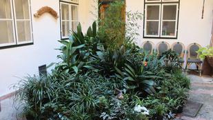 Budapest titkos kertjei a belvárosban nőnek
