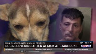 Napi rohadék: kiskutyával dobta be a Starbucks ablakát