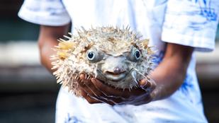 Egy komplett család haldoklik egy gömbhal miatt