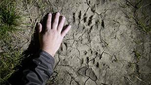 Medve gyilkolt Nógrádban