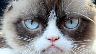 Grumpy Cat lesz a pankráció házigazdája