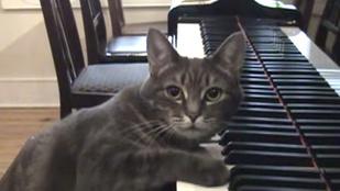Melyik állat a legjobb zeneszerző?