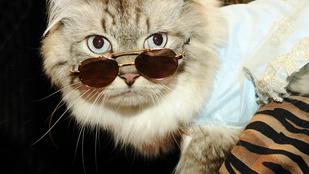 Nézegessen macskákat, akik utálják a világot