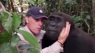 Így örül egy gorilla a nevelőjének, akit évek óta nem látott