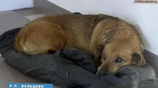 A kutya, aki két éve várja hiába gazdáját