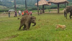 Napi cuki: kutyát kergetett a kiselefánt
