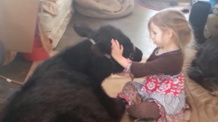 A kislány, aki beengedett egy tehenet a lakásba, hogy ölelgethesse
