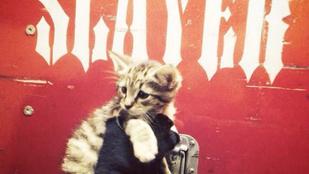 A Slayer megmentett egy kiscicát