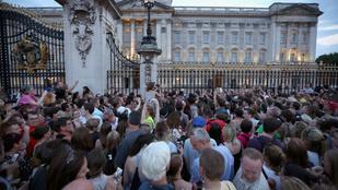 Hallucinogén gomba nő a Buckingham Palota kertjében