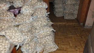 300 zsák fokhagymát loptak