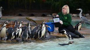 Nagyon unatkozik? Számoljon pingvineket!