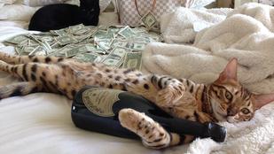 Ezek itt tényleg nagyon gazdag macskák