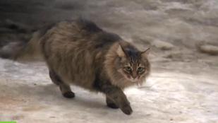 Napi cuki: Mása, a cica mentett meg egy babát a fagyhaláltól