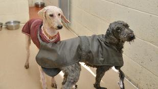 Szomorú, de cuki kutyák lettek a koszos felmosórongyokból